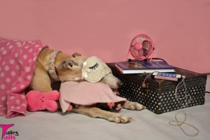 A Sense of Contentment -- Tales and Tails
