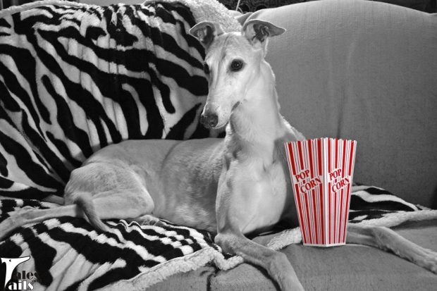 Movie Night -- Tales and Tails