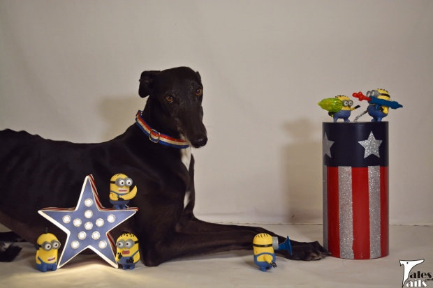 Get Ready For The Red, White And Boom -- Tales and Tails