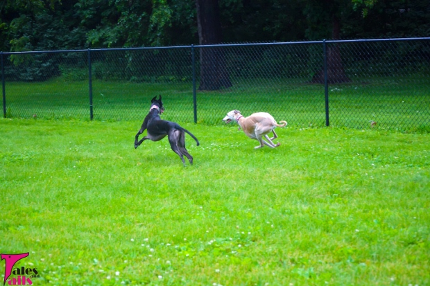 Hounds On The Run -- Tales and Tails