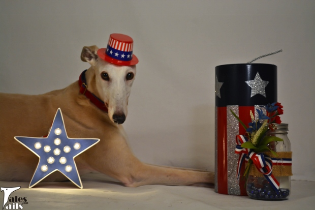Patriotic Miss -- Tales and Tails
