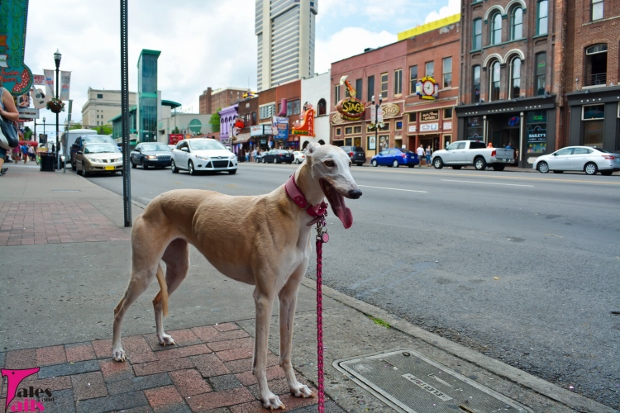 Sightseeing In Nashville -- Tales and Tails