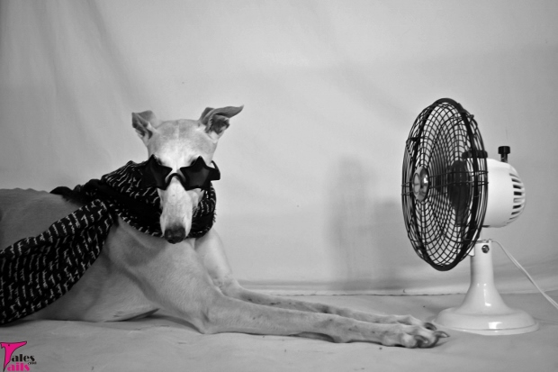 Just Too Cool -- Tales and Tails