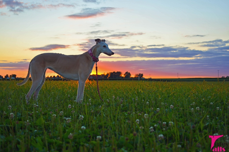 Sunset On Summer -- Tales and Tails