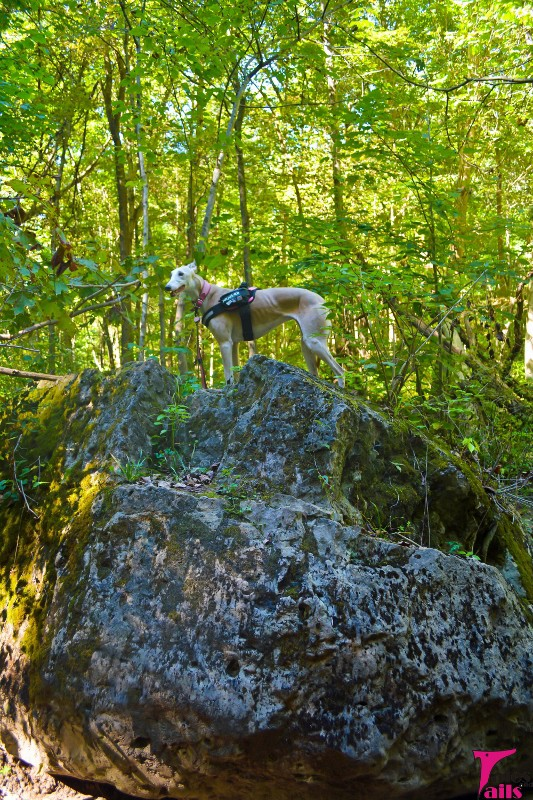 Queen of the Rock -- Tales and Tails