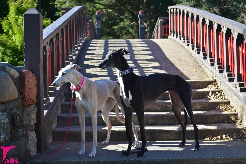 A Walk in Bradley Park -- Tales and Tails