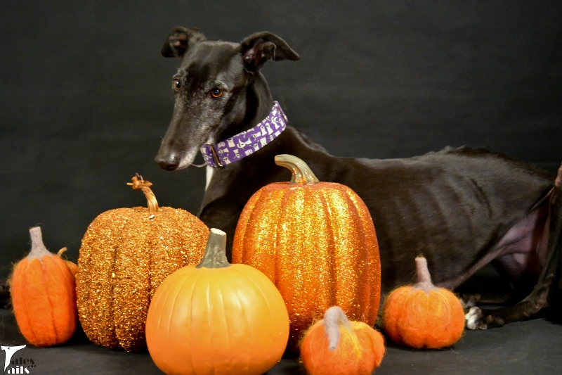 It's The Great Pumpkin, Flattery -- Tales and Tails