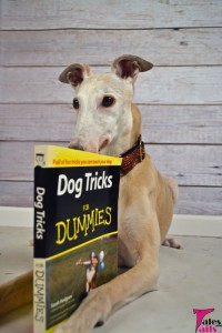 Old Dog, New Tricks -- Tales and Tails