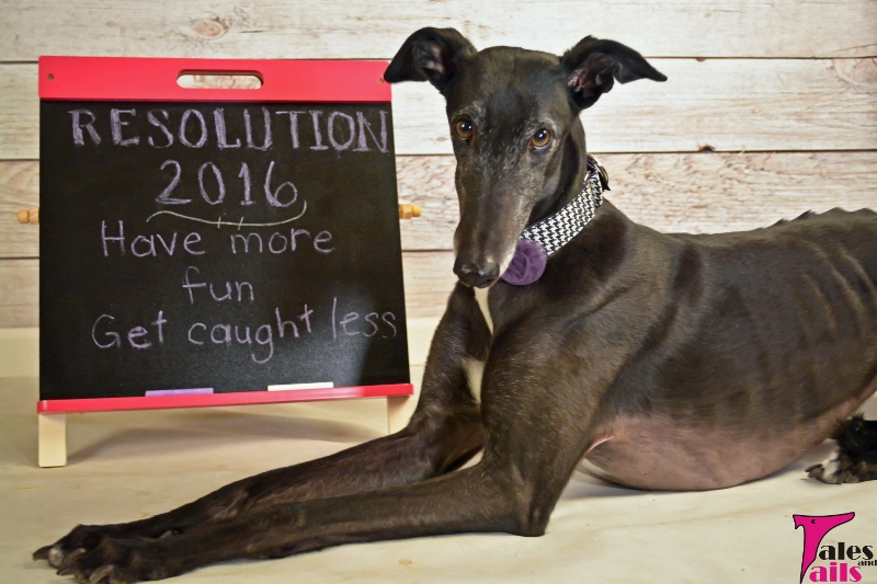 2016 Resolutions -- Tales and Tails
