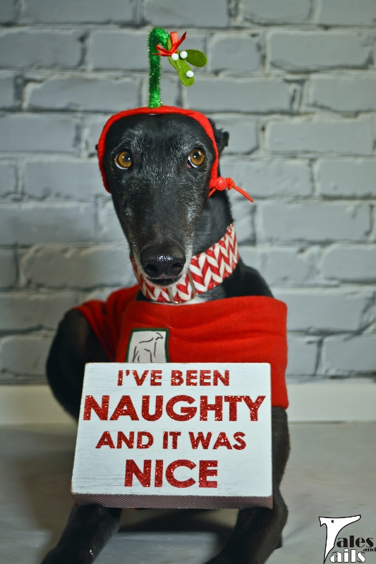 I've Been Naughty And It Was Nice... -- Tales and Tails