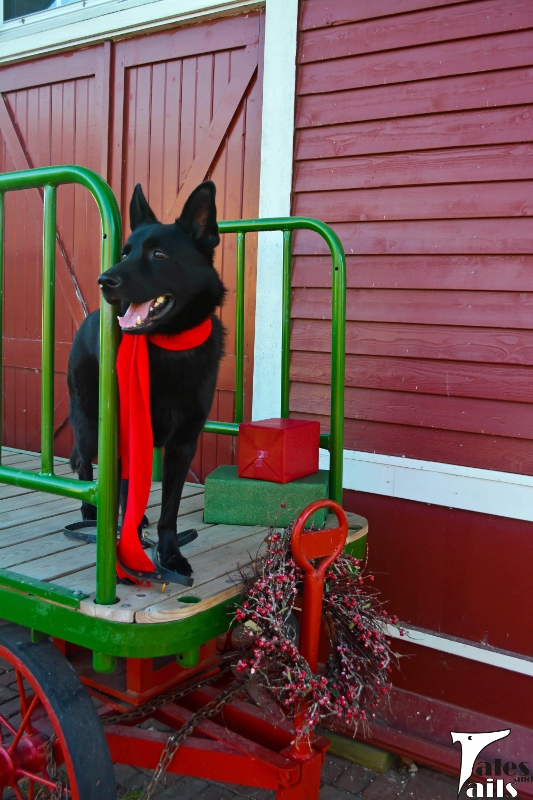 Küster Rides The Rails -- Tales and Tails