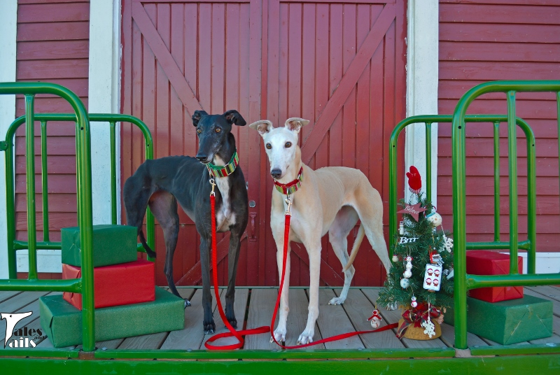 Merry Greyhound Christmas -- Tales and Tails