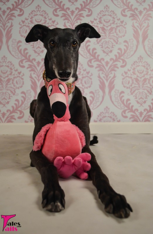 Tickled Pink -- Tales and Tails