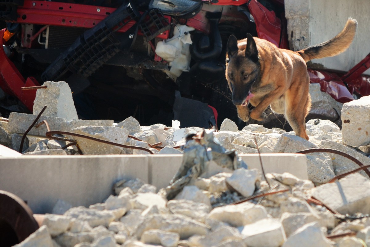 Demo of K9 Working on Rubble--TalesAndTails.com