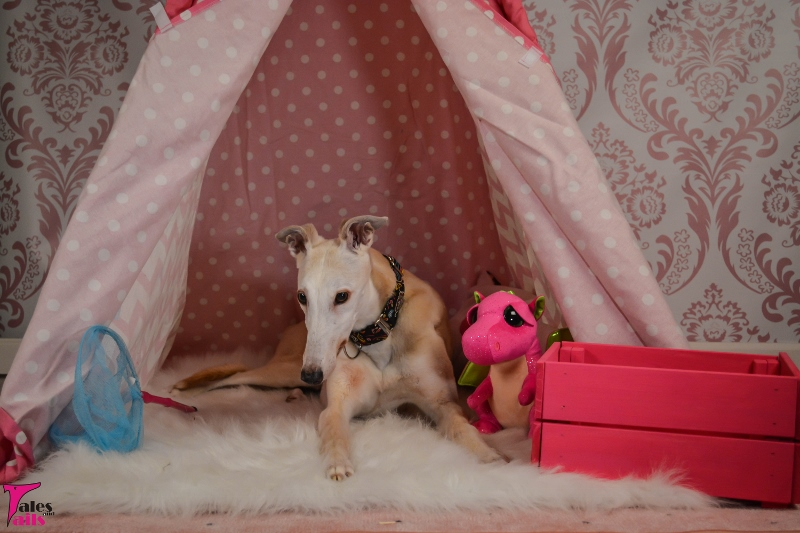 Glamping -- Tales and Tails