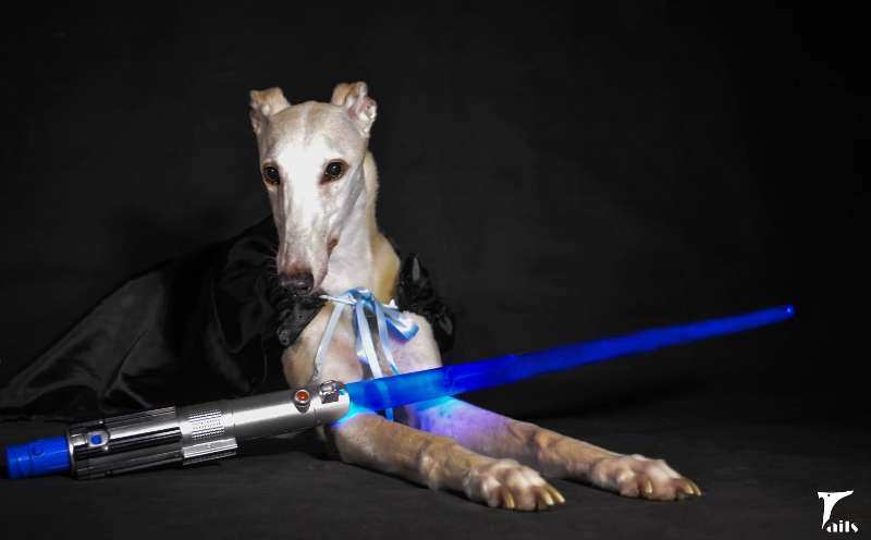 May The Fourth Be With You -- Tales and Tails