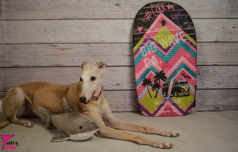 Surfer Girl -- Tales and Tails