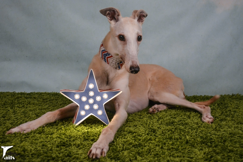 Stars and Stripes -- Tales and Tails