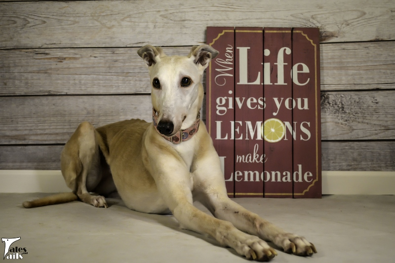 When Life Gives You Lemons -- Tales and Tails