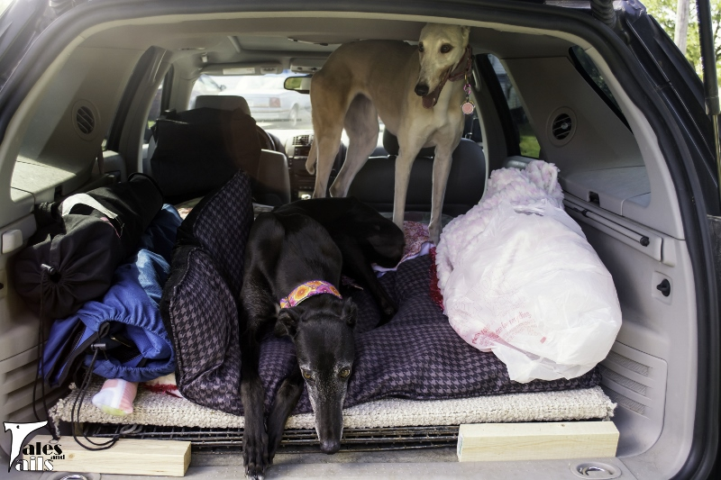 Ready To Head Home -- Tales and Tails