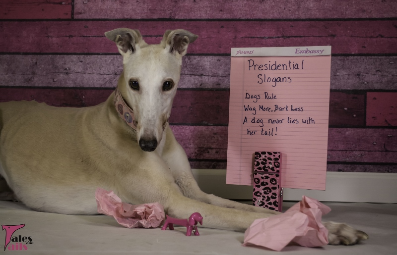 The Hopeful Candidate -- Tales and Tails