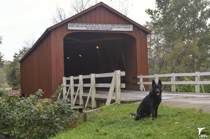 Küster at the Red Covered Bridge -- Tales and Tails