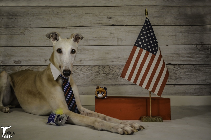 Dog For President -- Tales and Tails