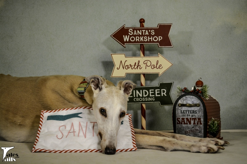Letter To Santa -- Tales and Tails