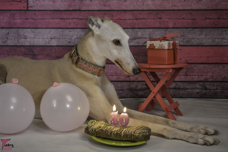 The Birthday Girl -- Tales and Tails