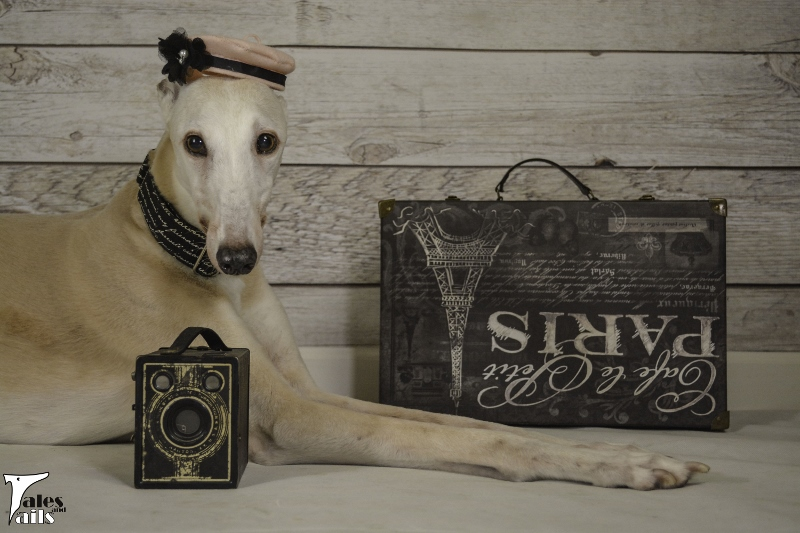 The Shutterbug -- Tales and Tails