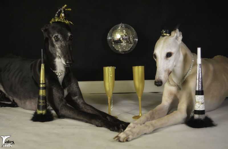 Rocking New Year's Eve -- Tales and Tails