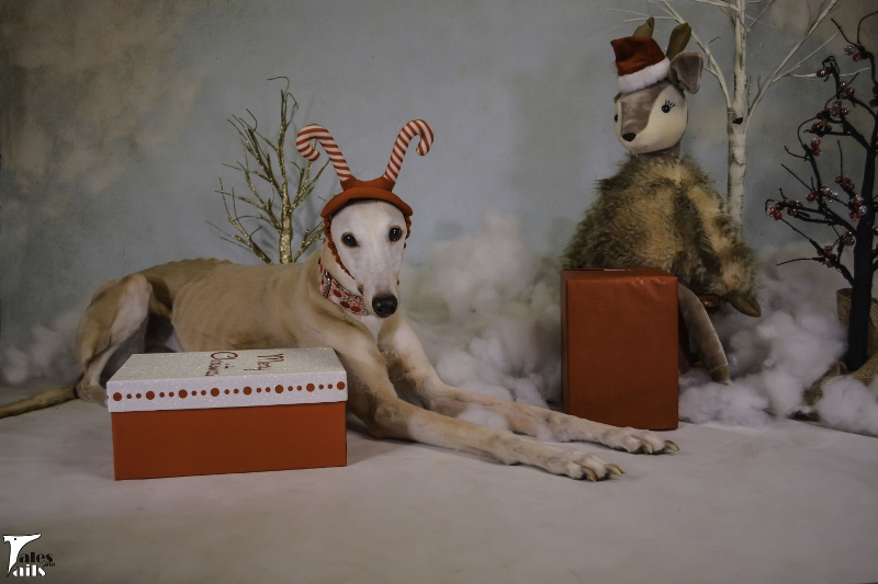 We Wish You A Merry Christmas -- Tales and Tails