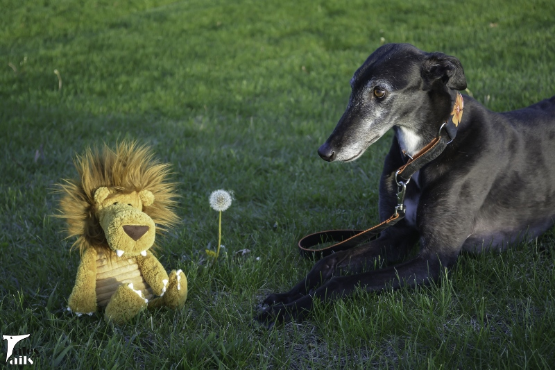 Dandelion -- Tales and Tails