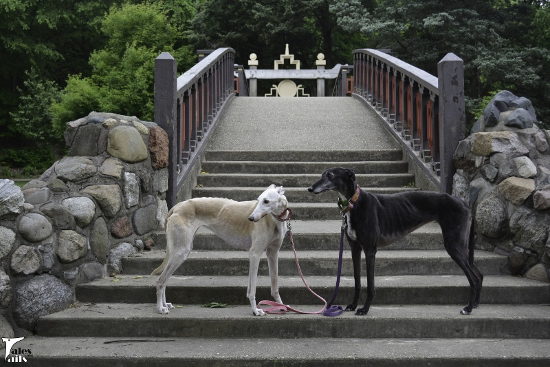 Bridge Bookends -- Tales and Tails