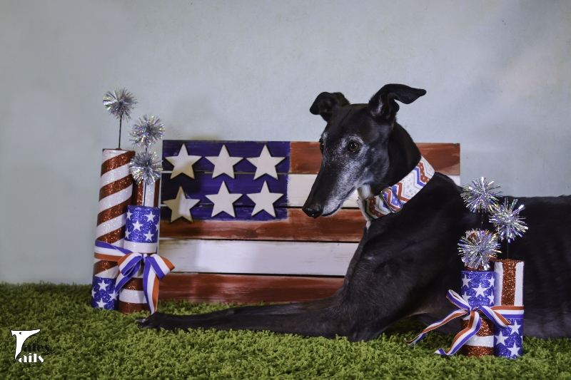 Love The Red, White And Blue -- Tales and Tails