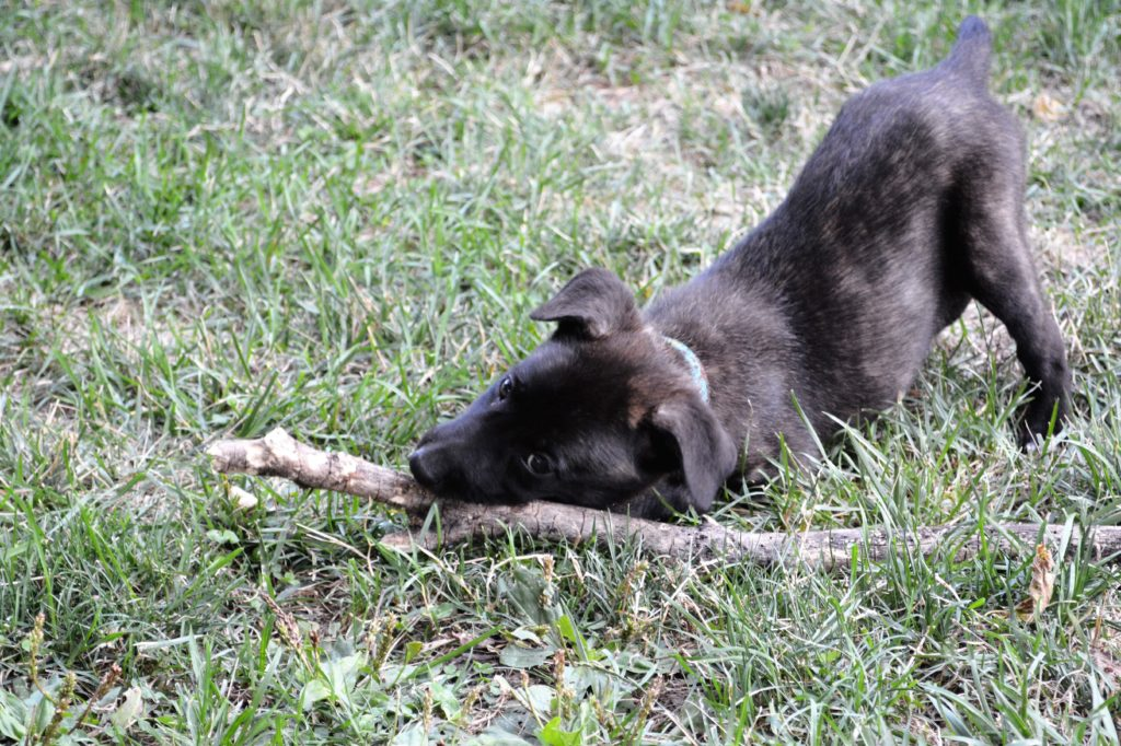 K9 Oma and stick--TalesAndTails.com