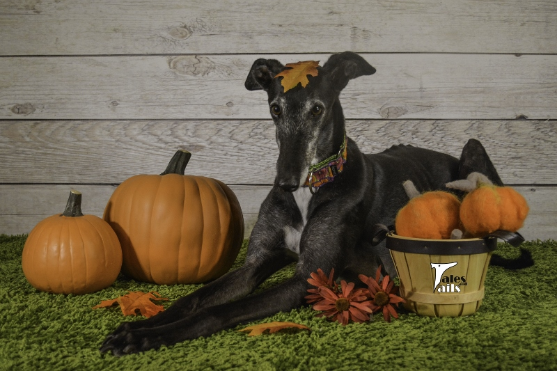 Happy Fall Y'all -- Tales and Tails