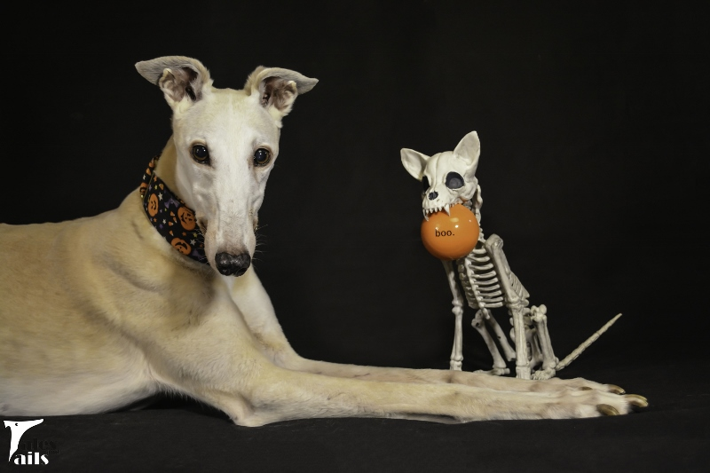 Boo Who? -- Tales and Tails