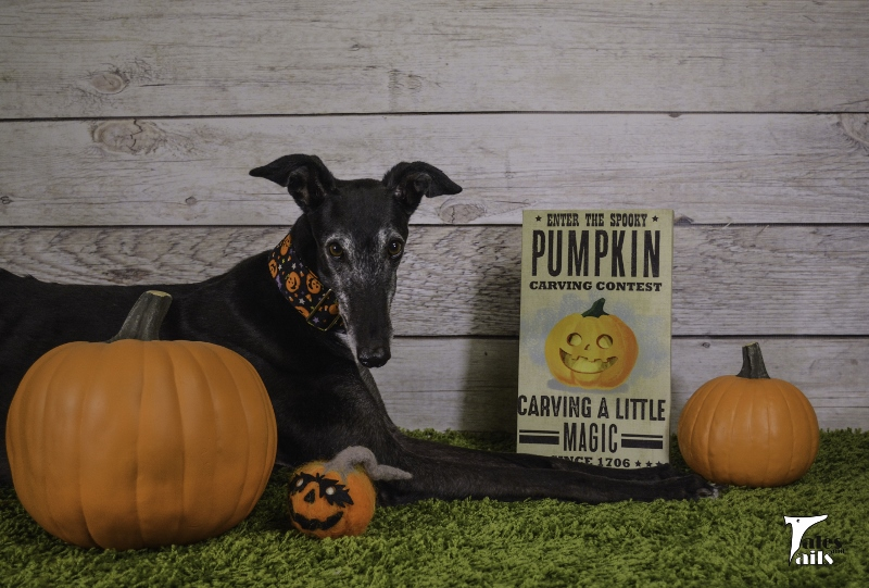 Pumpkin Carving Fun -- Tales and Tails