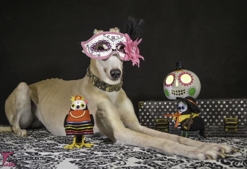 Sugar Skull Celebration -- Tales and Tails