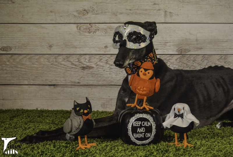 Trick Or Tweet -- Tales and Tails