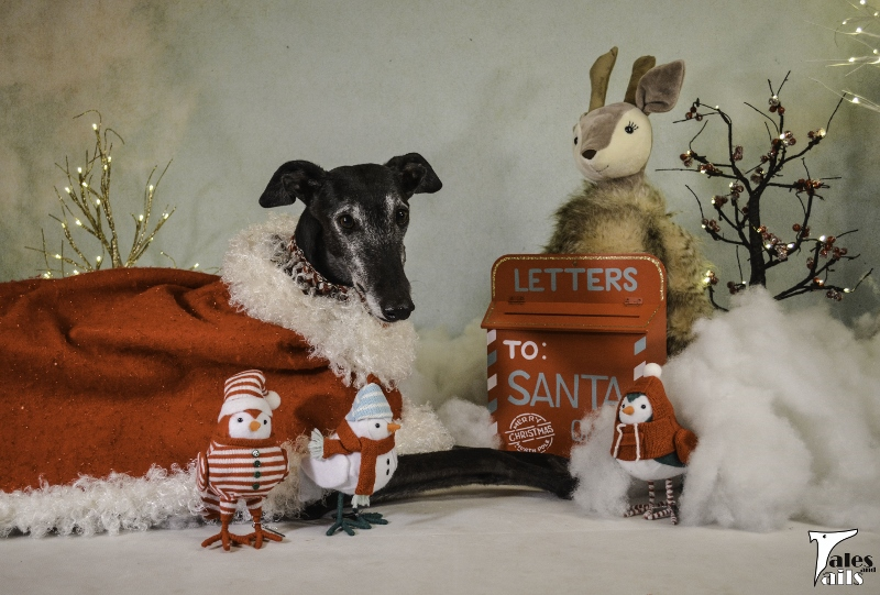 Dear Santa -- Tales and Tails