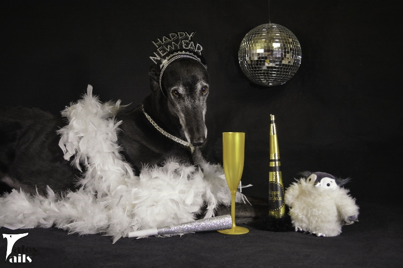 Flattery's Rocking New Year's Eve -- Tales and Tails