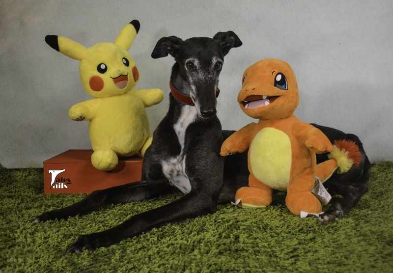 Gotta Catch 'Em All -- Tales And Tails