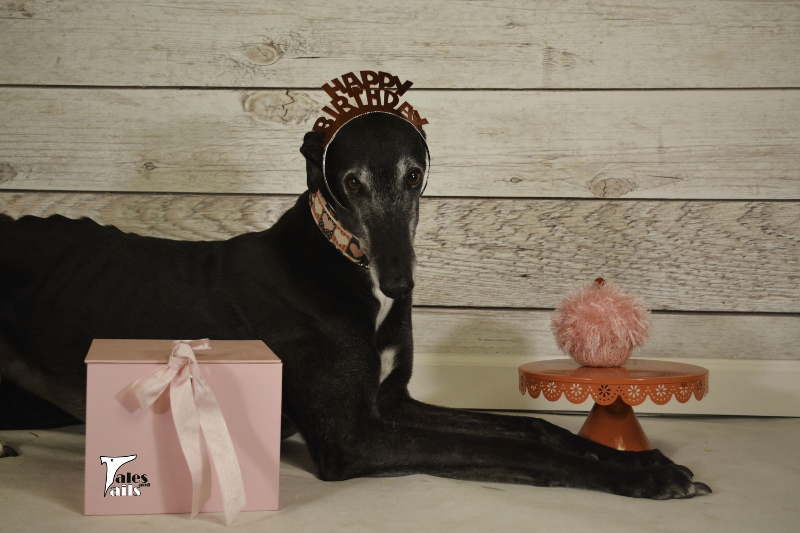 Birthday Girl -- Tales and Tails