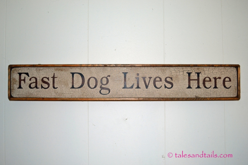 Fast Dog Lives Here -- Tales and Tails
