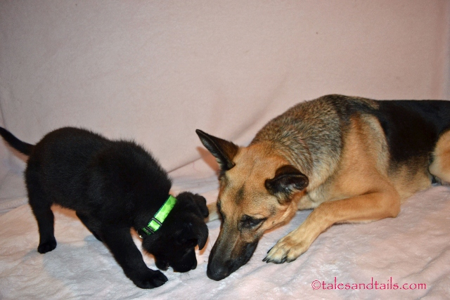 Sharing Shepherd Secrets -- Tales and Tails