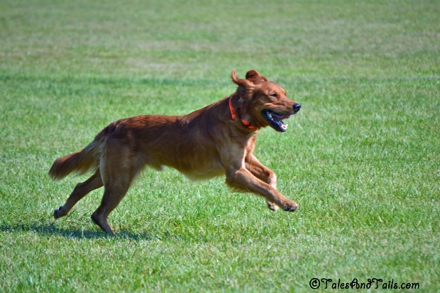 Buzz on the Run -- Tales and Tails