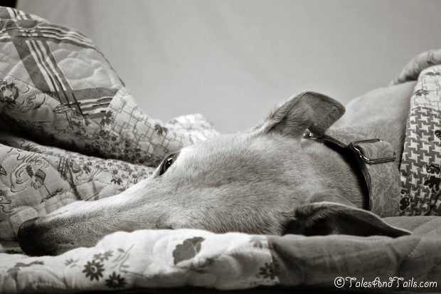 Contentment -- Tales and Tails