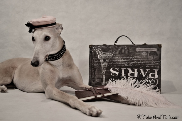 The Memoirs of A Greyhound -- Tales and Tails